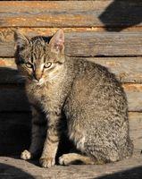 ¿Por qué un gato ronronea y respiración divertido Después de Vacunaciones