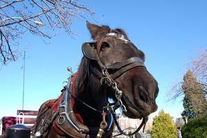 Como montar un collar de caballo de arnés
