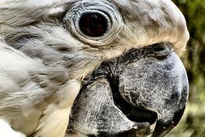 Enfermedades de los ojos de los loros