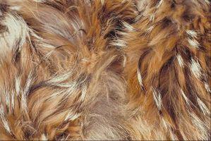 Cómo tratar una infección de levadura en la piel de los perros