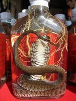 Cobra Bites