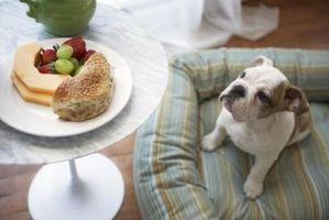 Cachorro Consejos de Formación para la Alimentación Tragando
