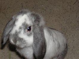 Lista de alimentos saludables para Conejos