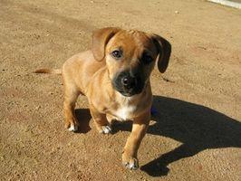 Los beneficios de aceite de linaza para perros