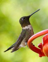 Cómo limpiar el moho en vidrio Hummingbird Feeders