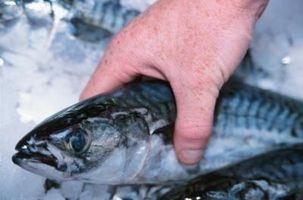La forma más rápida para descongelar el pescado congelado
