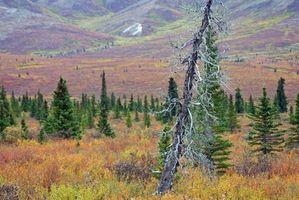 Razones para visitar la tundra