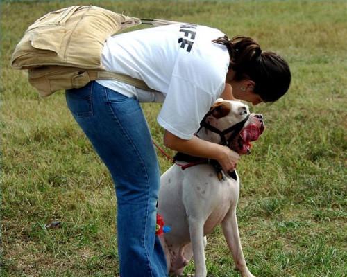 Escuelas de Formación del perro en Texas