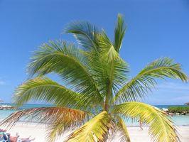 Hoteles de cinco estrellas en Negril, Jamaica