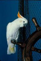 ¿Con qué frecuencia se debe cortar las alas de un pájaro?