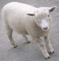La mejor tierra de diatomeas para cabras y ovejas
