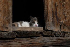 Los nemátodos o tenias en gatos