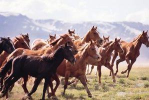 Cómo domar un caballo abandonado