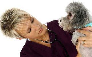 Cuáles son las causas de lipomas en los perros?