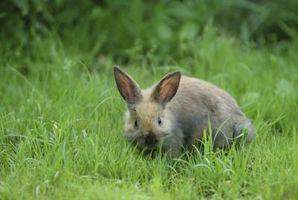 ¿Qué alimentos no son buenos para los conejos adultos?