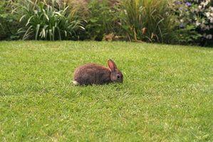 Ecosistema de un conejo