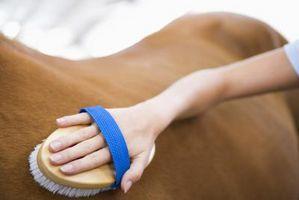 Lo que hay que alimentar a mi caballo para un pelaje brillante