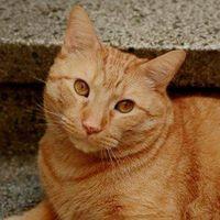 ¿Cómo deshacerse del gato del impulso del olfato