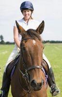 Divertidos juegos para jugar a caballo y en el suelo con los caballos