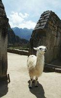 Cortos de Camino Inca