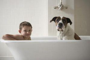 Receta para el hecho en casa sin enjuague champú para perros