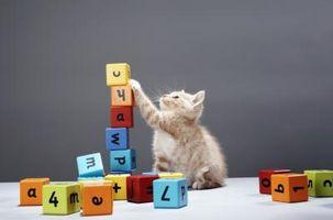 Los gatos son atraídos a los colores?