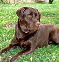 Los efectos secundarios de Hydroxyzine en perros