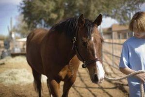 Cualidades de un buen trimestre del caballo