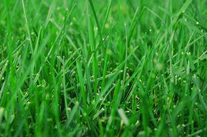 Productos para neutralizar la orina del perro en hierba