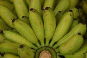 Cómo hacer chips de plátano con un deshidratador