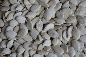 Cómo hacer que las semillas de calabaza El uso de un deshidratador