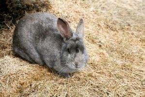 Cómo mantener la botella de agua al aire libre 'Mis conejos sin congelar
