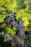 Tipos de vino oscuro
