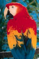 Compatibles con las aves Cockatiels