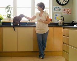 Cómo sacar un nuevo gato en su casa y que ha perdido a un propietario