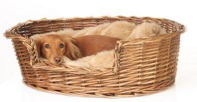 Cómo ayudar a un perro con el sueño Incontinencia