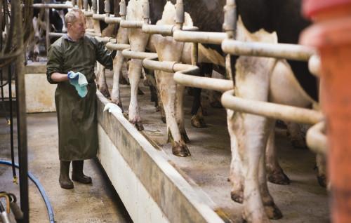 Productos químicos encontrados en la pasteurización de la leche cruda