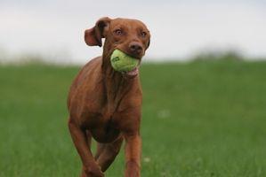 Cómo instalar una valla PetSafe perro eléctrico