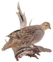 Lista de Aves extintas