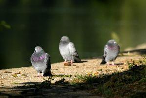 ¿Cómo deshacerse de los pájaros de la jerarquización en las vigas