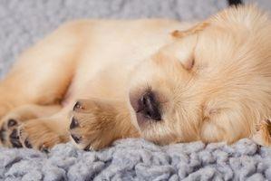 Un collar de adiestramiento para un pequeño perrito
