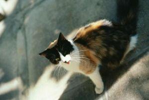 Cómo atrapar un gato perdido si sólo viene a comer en la noche