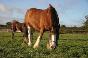 ¿Qué necesitan los caballos para estimular su apetito?