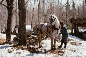 Cómo conectar un caballo de arnés