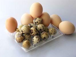 Cómo hacer que las gallinas comienzan a poner huevos