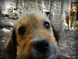 ¿Qué hace Mirada del ojo como el de un perro cuando la retina se separa?