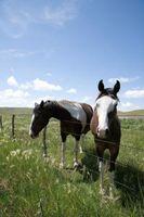 ¿Qué verduras se pueden comer los caballos?