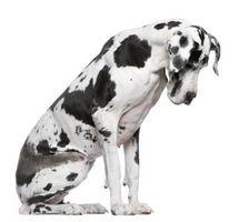 Trastornos neurológicos en los perros