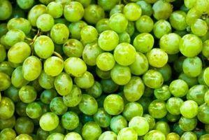 ¿Cuáles son Thompson uvas sin semillas?
