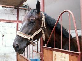 Cómo preparar un establo de caballos de goma Esteras